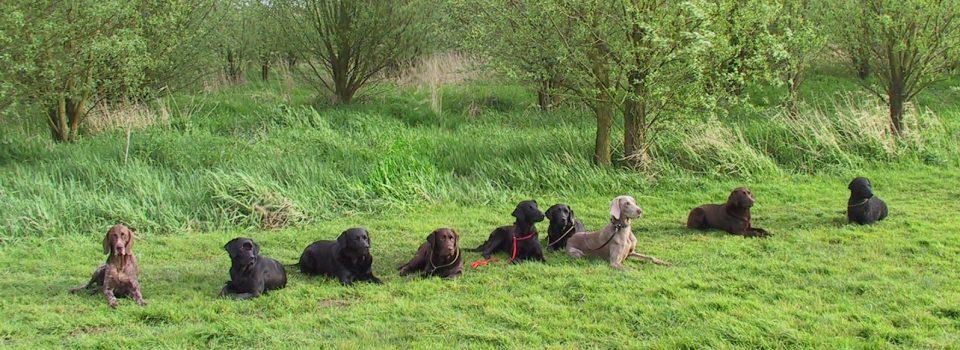 Jachthonden Apporteertraining Rijn en Duin